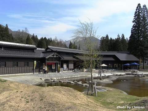 Mitsumata 20160420_02.JPG